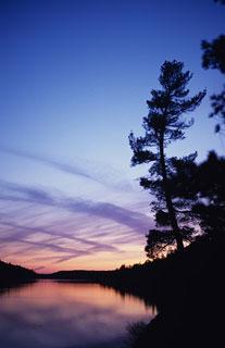 let freedom ring through the trees of Saskatchewan