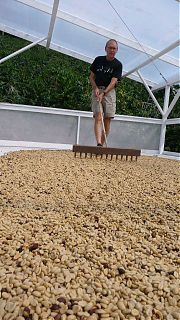 Colin rakes drying beans at Blue Horse Kona Coffee farm